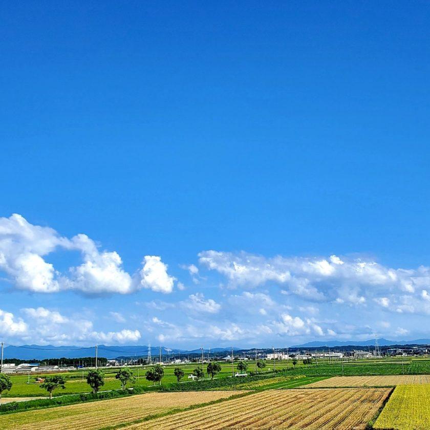 竜王の田園風景稲刈り中